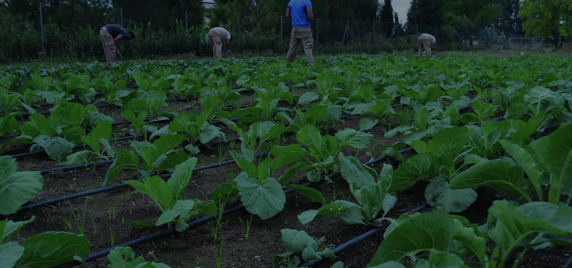Una iniciativa por la agricultura ecológica
